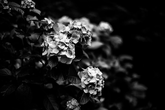 Flowers with No colors