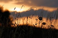 Brasier au coucher / Blaze at the sunset (2)