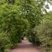 Overgrown Walkway