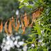 Scotland's Gardens Craigintinney Telferton July 2018 -107