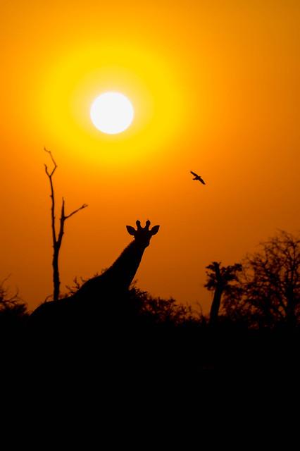 South African Sunset, RICOH PENTAX K-3, HD PENTAX-D FA 150-450mm F4.5-5.6 ED DC AW