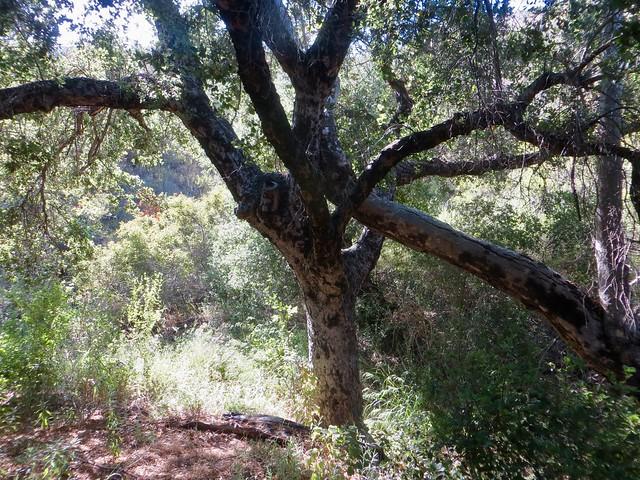 oak trees help each other
