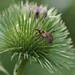 P7130017 Bug