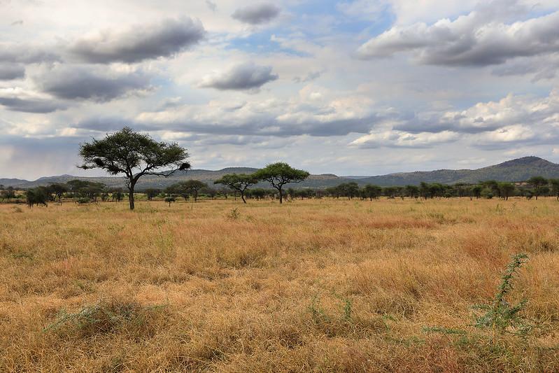 Nimali camp view