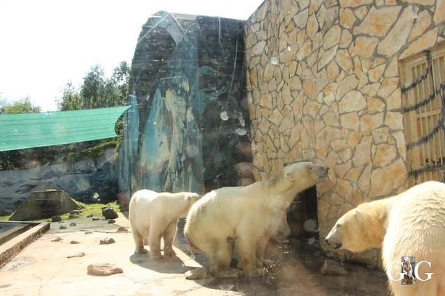 Besuch Zoo Sosto 20.06.+21.06.201888
