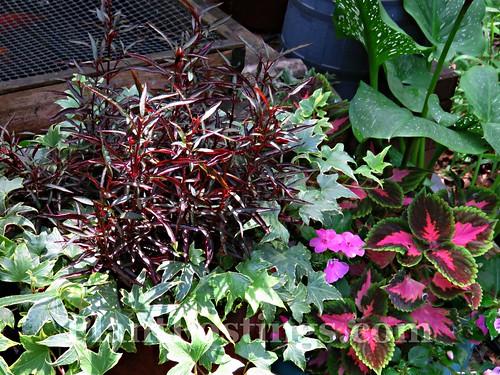 mixed foliage 2