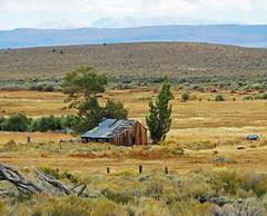 Desolation, Conroy Ranch, Mono Country, CA 2017
