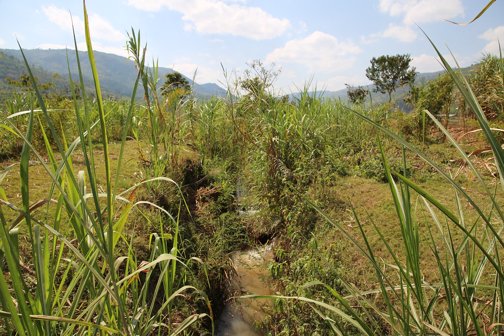 Restoring Yanze River and Watershed Protection - Rwanda Green Fund Investment