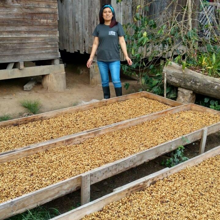 Recolección de café en Chanchamayo