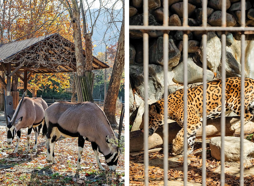 seoul_grand_park_animals