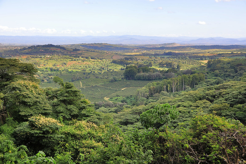 Ngorongoro Forest view