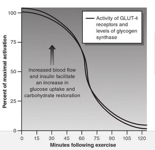 運動後GLUT4活性變化