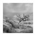 Dartmoor Tree by Nick green2012