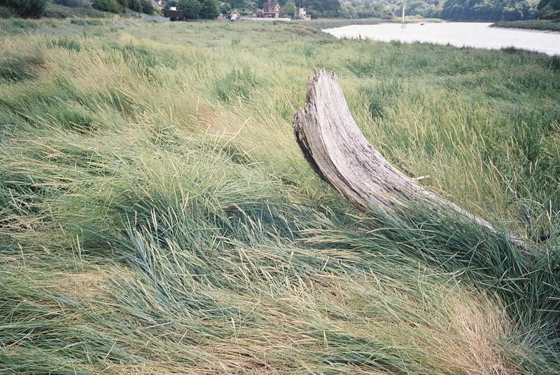 Avon driftwood