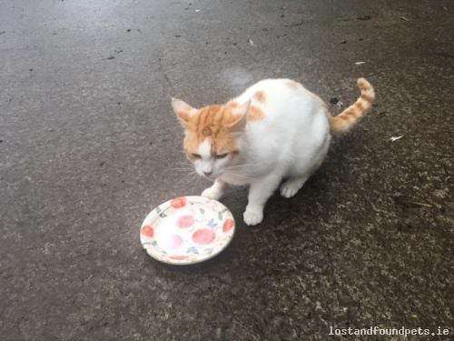 Mon, Aug 6th, 2018 Found Male Cat - The local area, Liscasey, Clare