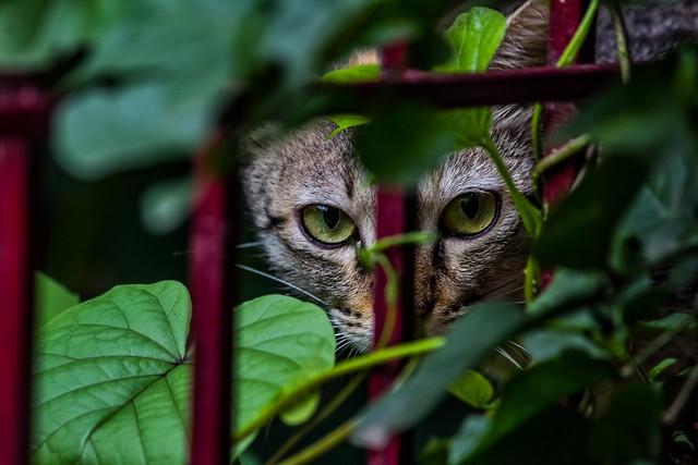 Predator Eyes, Canon EOS 1200D, Canon EF-S 55-250mm f/4-5.6 IS II