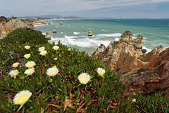 Praia Camilo