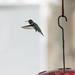 hummingbird_feeder-20180819-100