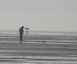 Dedicated birder