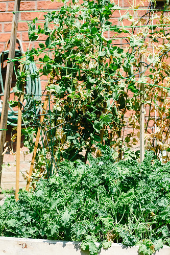 Lessons learned from out first ever Backyard Vegetable Garden | by Get Kamfortable