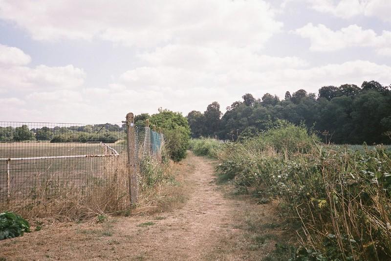 Shirehampton Footpath (scorched grass)
