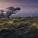Primeras luces del día en La Isleta del Moro (Parque Natural de Cabo de Gata)