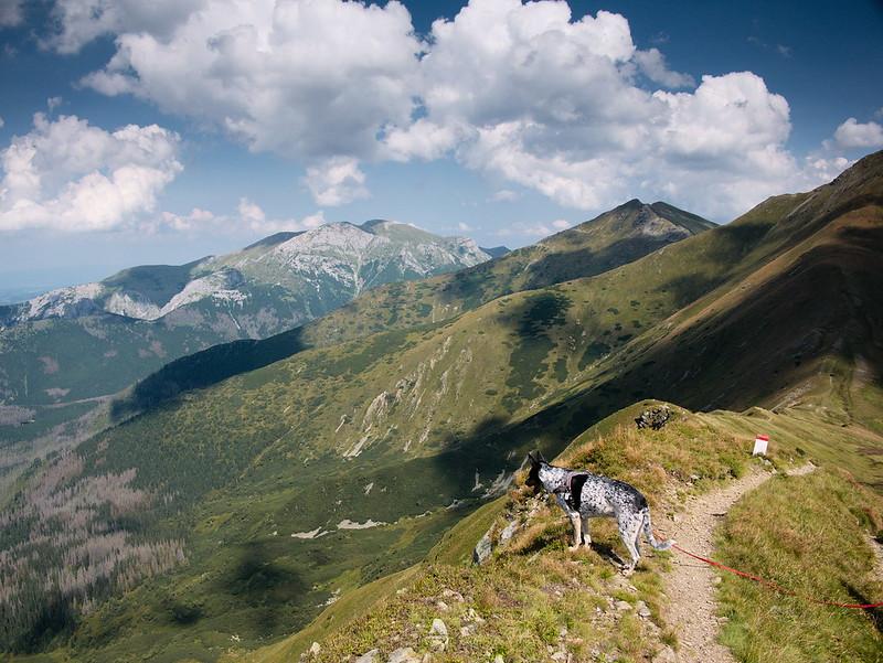 Tatry Zachodnie pies dolina kamienista błyszcz