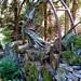 Barley, Aitken Wood - Pendle Sculpture Park (7)