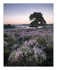 Bratley View, New Forest