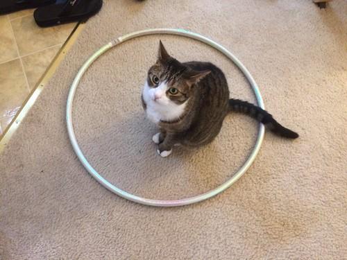 Amelia in a Hoop