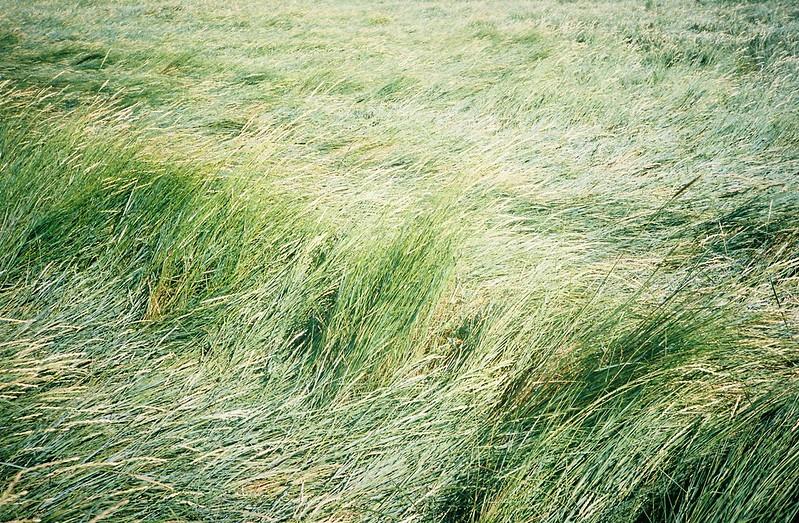 Sea of grass, Pill Foreshore