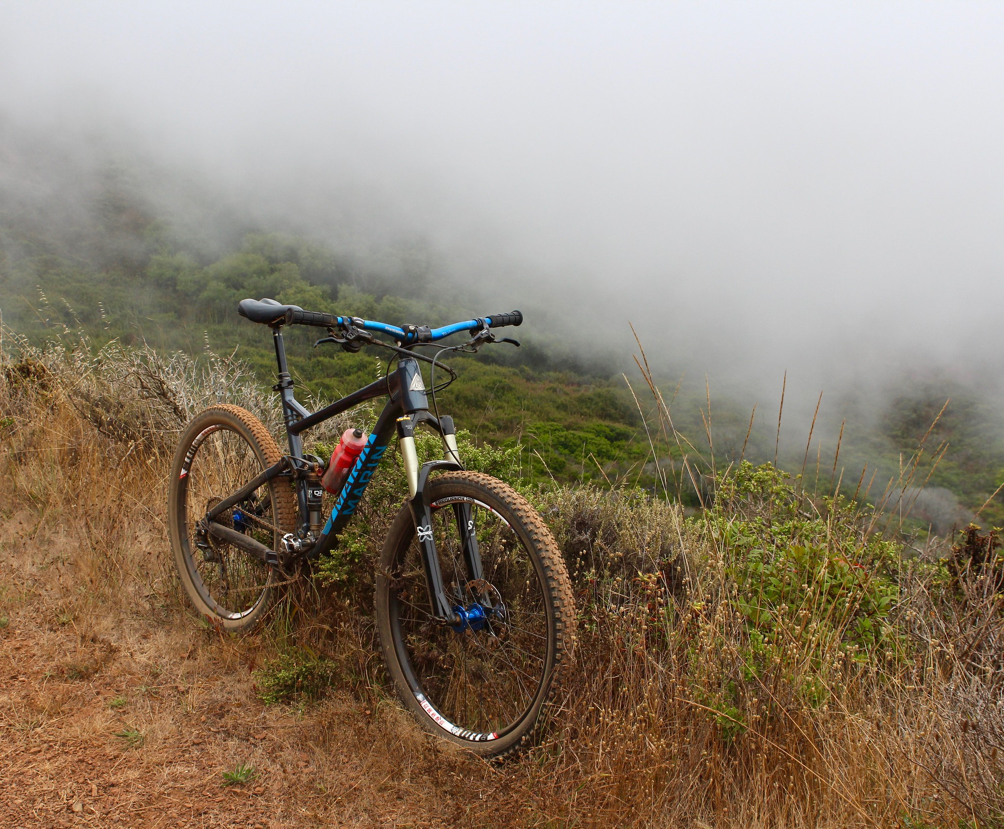 fogust in marin county