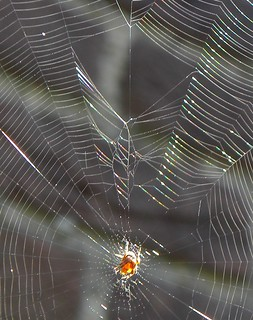 The spider that got bored...