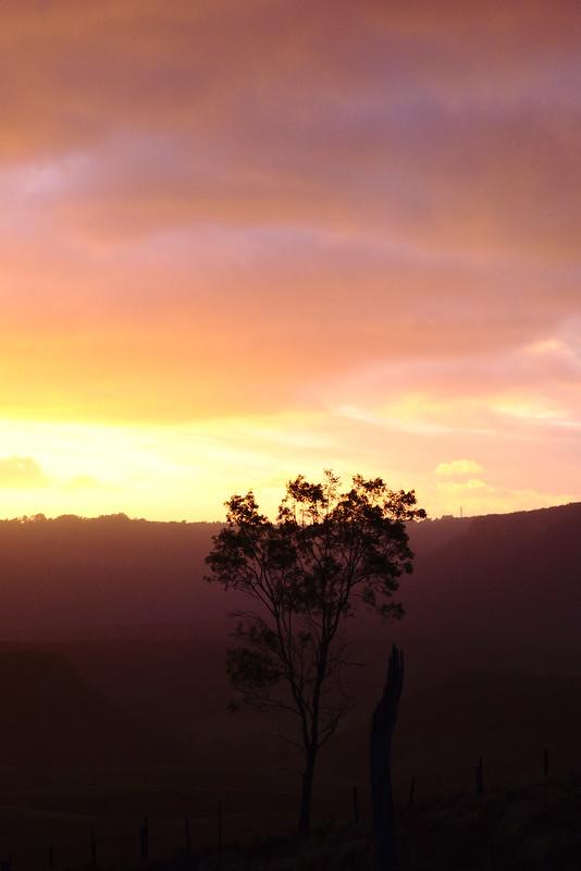 Tree at sunrise, Kanimbla Valley