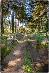 sentier de Margeride - Photo of Saint-Symphorien
