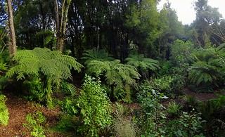 The Fernery, Otari Garden, Wilton Road, Wellington, New Zealand 180818 008