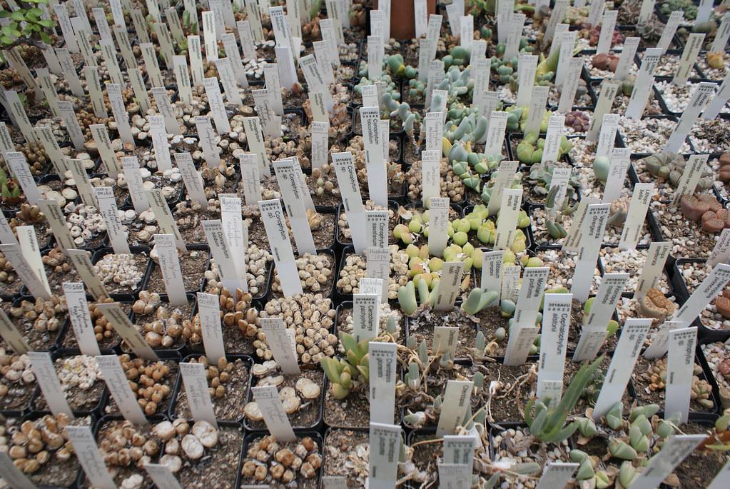Jardin botanique Zuidas à Amsterdam