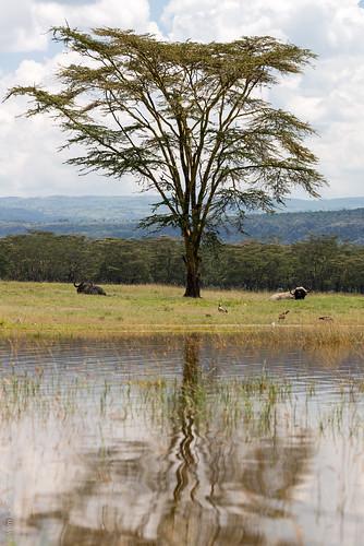 africa lakenakuru kenya nakuru nakurucounty ke