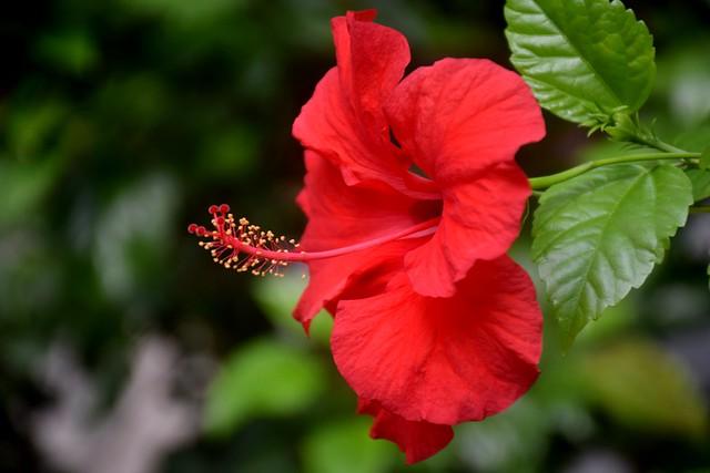 Flower 🌺🌺