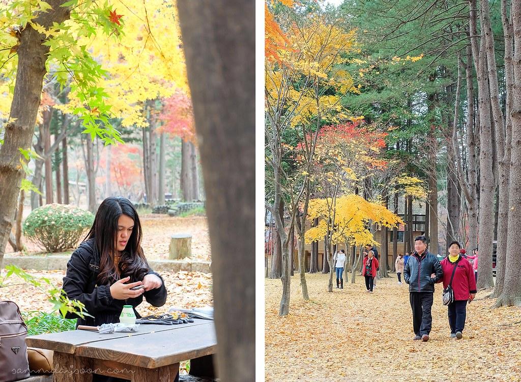 autumn_colors_nami_island