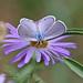 Ceraunus Blue (Hemiargus ceraunus) by Alexander Viduetsky