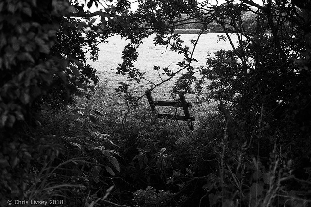 Hardly a Fence Flickr150618M9 3