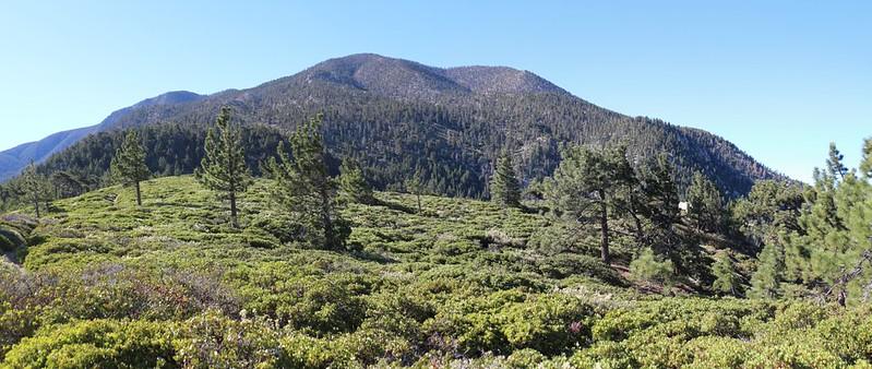 San Bernardino Peak from Manzanita Flat