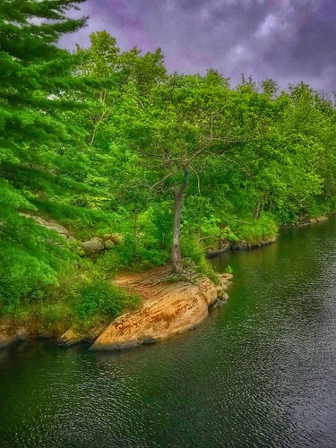 nature trees river swingingbridge brunswickme maine