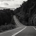 road by Carolina Fallo