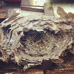 Old nest