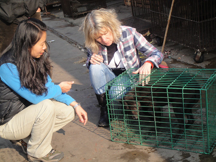 Cat and Dog Welfare Director Irene Feng and Founder and CEO Jill met Tozhai the dog in China market, 2010