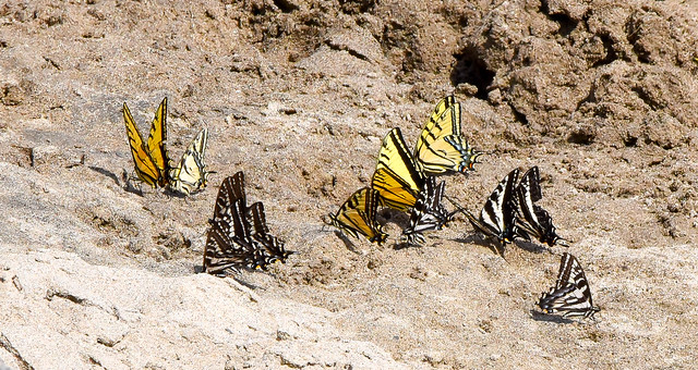 Butterfies on the Beach