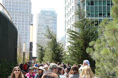 Salesforce Transit Center - Pine trees