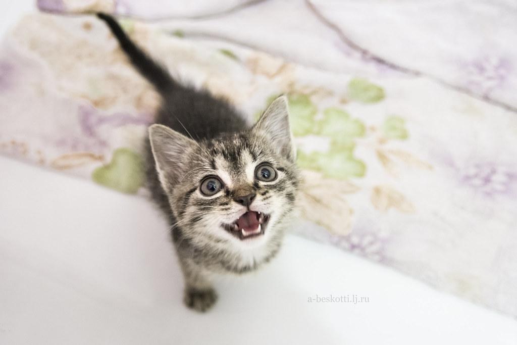 Котёнок_9с